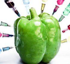 Ventajas y desventajas de OGM