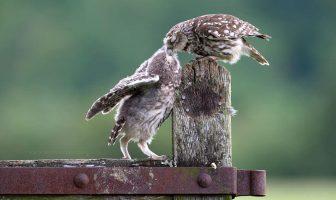 Besar animales demuestra que los besos no son solo para las personas