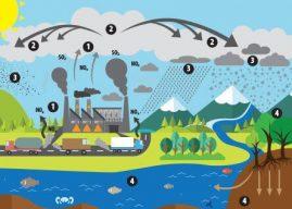 Los efectos de la lluvia ácida en los ecosistemas