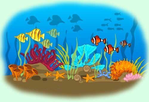 acidificacion oceano