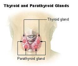 tiroides-paratiroides
