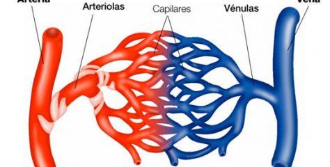 Diferencia entre arterias y venas