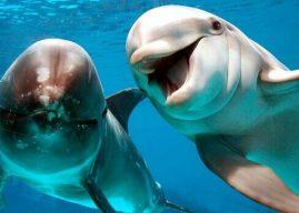 Datos de delfines para niños