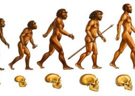 Contribución de Darwin a la teoría de la evolución