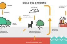 Ciclo del Carbono