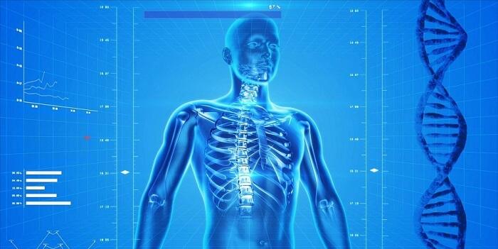 Frases De Anatomía