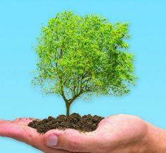 Frases del Día del Árbol – Las mejores citas sobre árboles para el día del árbol