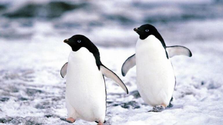 Información Sobre el Pingüino