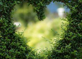 Frases de Creer en el Amor
