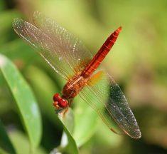 22 de Mayo Día Internacional de la Diversidad Biológica