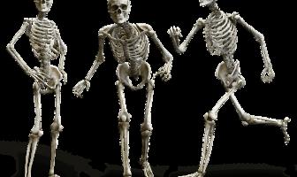 Definición y funciones de la médula espinal