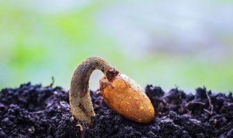 ¿Qué es la semilla? ¿Cómo producen semillas las plantas? Funciones de las semillas