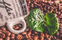 Los principales países productores de café del planeta. Primeros 10 países