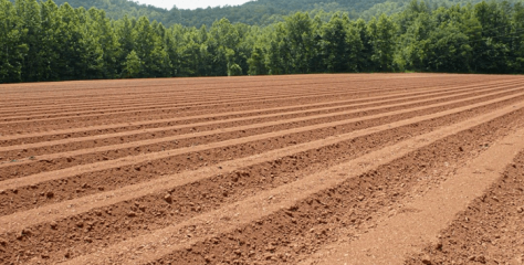 ¿Qué es el suelo? Tipos de suelo: ¿Cuáles son los tipos de suelo?