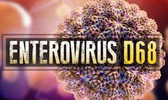 ¿Cuál es la definición de enterovirus? ¿Cuáles son las características de Enterovirus?