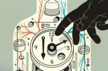 Reloj biológico en humanos: animales y plantas (definición)