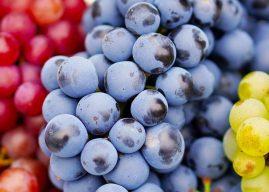 Consejos para el cultivo de la uva y la vid, historia de la uva