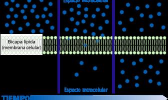 Difundir sobre una membrana celular