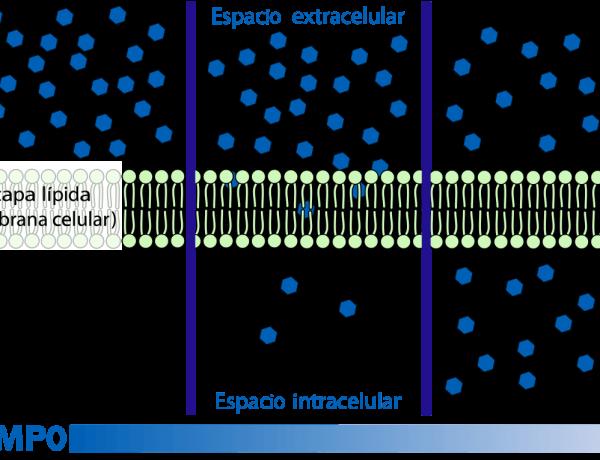 Lista de varias cosas que pueden difundirse sobre una membrana celular