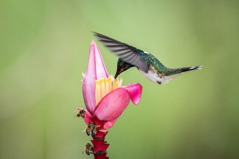 Polinización por aves