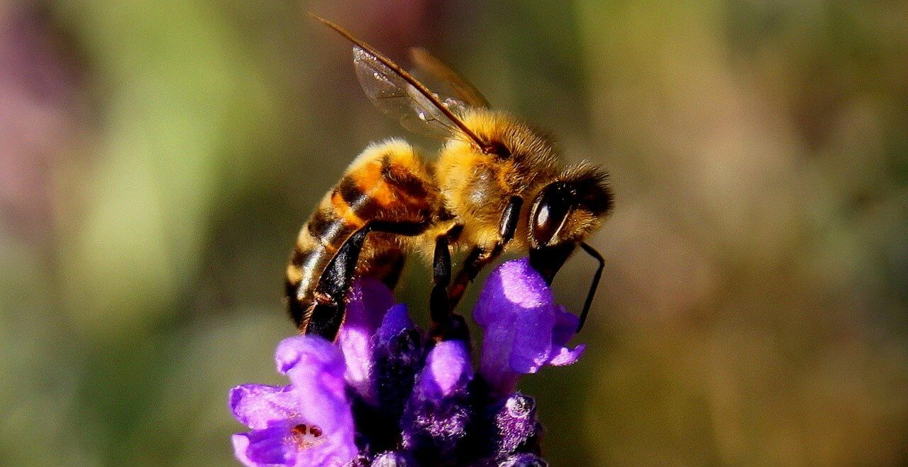 ¿Cómo polinizan las abejas y las avispas? Importancia de la polinización por abejas y avispas