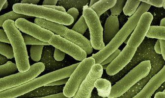 Información sobre bacterias y virus: propiedades, hechos, similitudes y diferencias