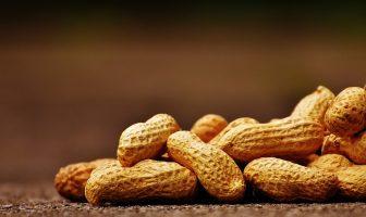 Información sobre el maní: ¿Cuáles son las características, características y usos del maní?