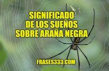 araña negra