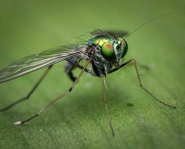 ¿Por qué son importantes las moscas para el ecosistema? Importancia y distribución