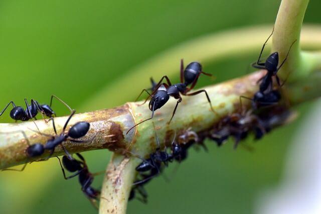 La estructura corporal de las hormigas: ¿qué es la anatomía, la estructura corporal y las partes de las hormigas?
