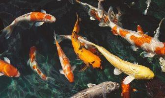 ¿Cómo afecta la contaminación acústica a los peces? Las especies más afectadas