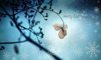 ¿Por qué el día de Navidad es el 25 de diciembre?