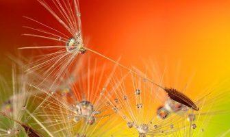 ¿Cómo crecen las semillas? ¿Qué causa el crecimiento de una semilla?