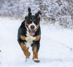 ¿Cuánto pesa un perro promedio?