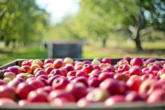 Cultivo de manzanas: ¿cómo cultivar manzanas? y enfermedades de la manzana