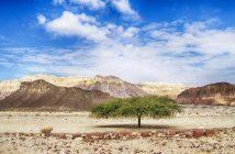¿Especies de Acacia y Para Qué se Utiliza?