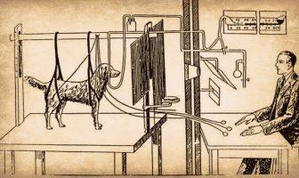 Experimento del perro de Ivan Pavlov: ¿qué es el reflejo condicionado?