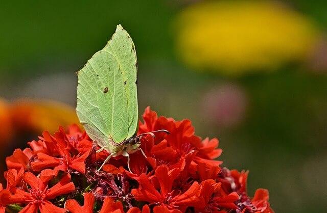 Información sobre la adaptación y el comportamiento de los insectos