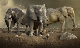 ¿Sueñan los animales? ¿Es esto una imaginación real?