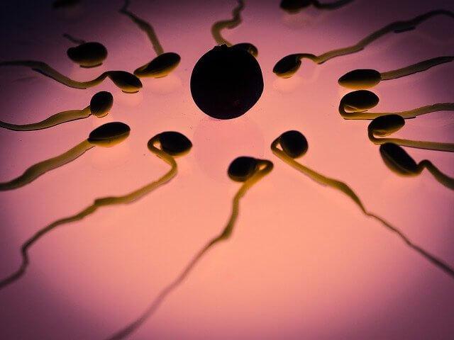 ¿El estrés afecta la calidad del esperma? ¿Cómo tener espermatozoides sanos?