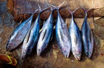 Datos sobre el atún: ¿Cuáles son las características del atún?