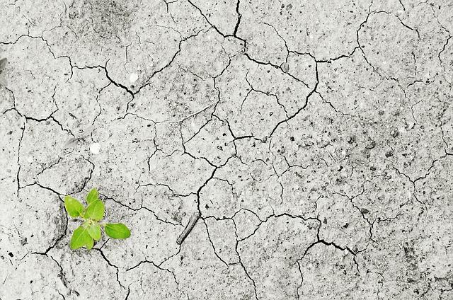 Contaminación del suelo y sus efectos sobre la salud humana