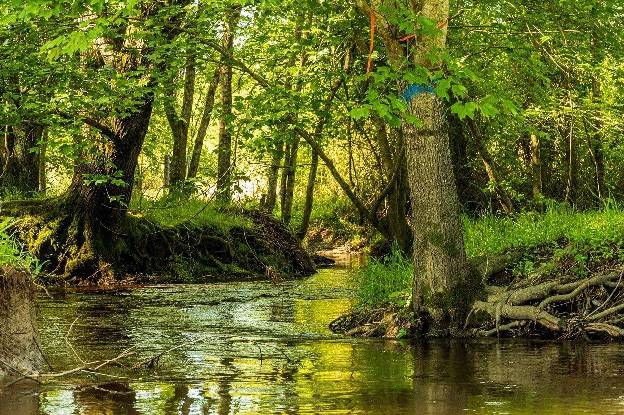 ¿Qué es la erosión del agua? ¿Cómo podemos conservar el agua?