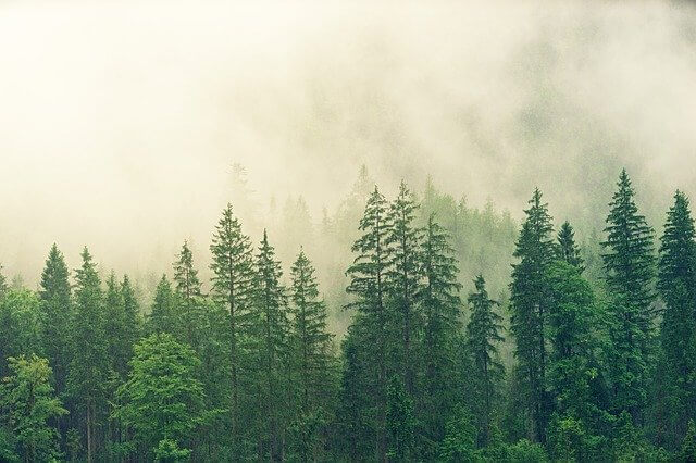¿Qué hace la niebla y las nubes?