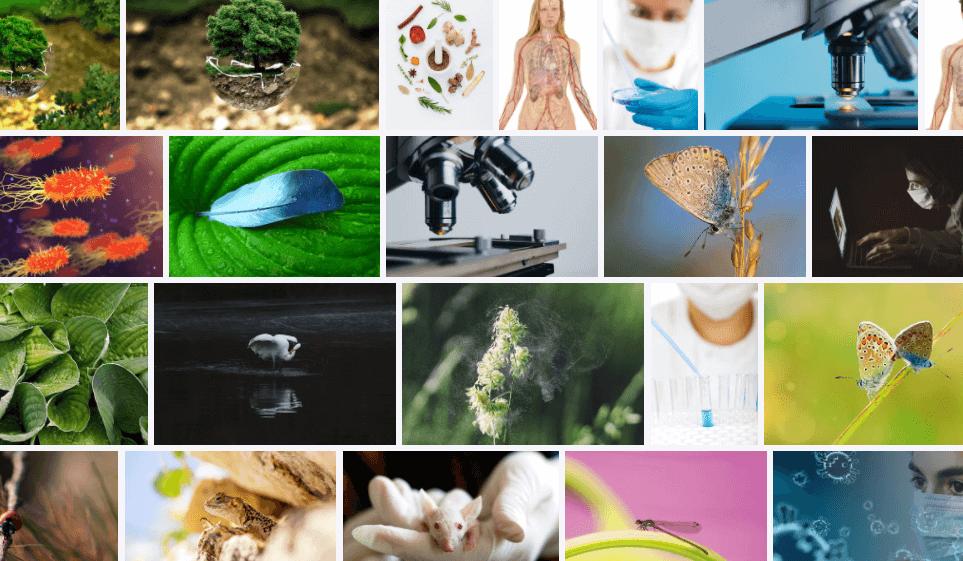 Definición de biología: ¿cuál es la definición simple de biología?