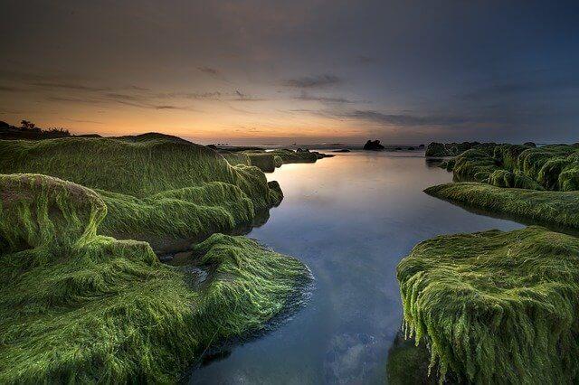 Características de las plantas como protistas: algas