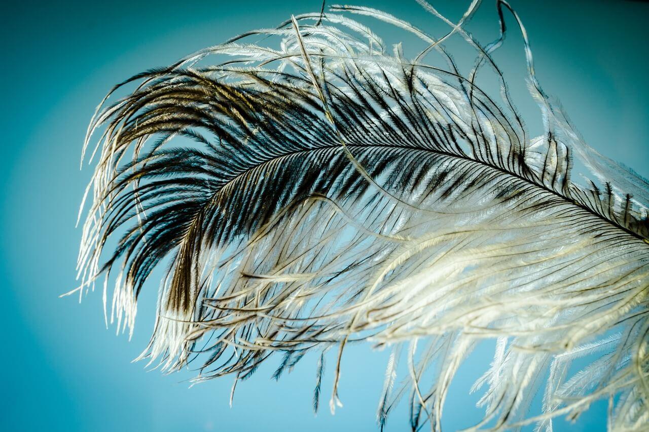 Estructura de la pluma - Crecimiento y tipos - Información sobre la pluma